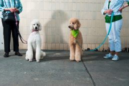 dogs and owners © Benjamin Tafel